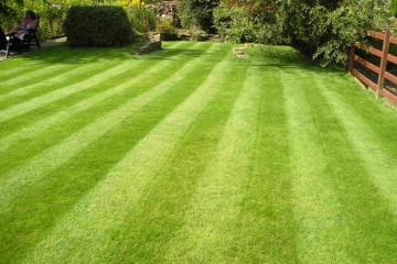 Fine Lawn Care Program