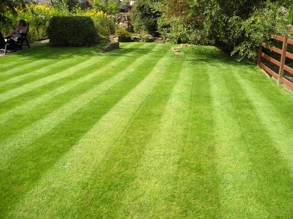 Lush lawn in Beverly, MA using Finest Green lawn care