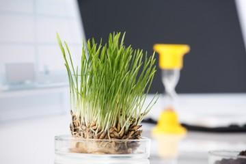 Soil Quality Analysis